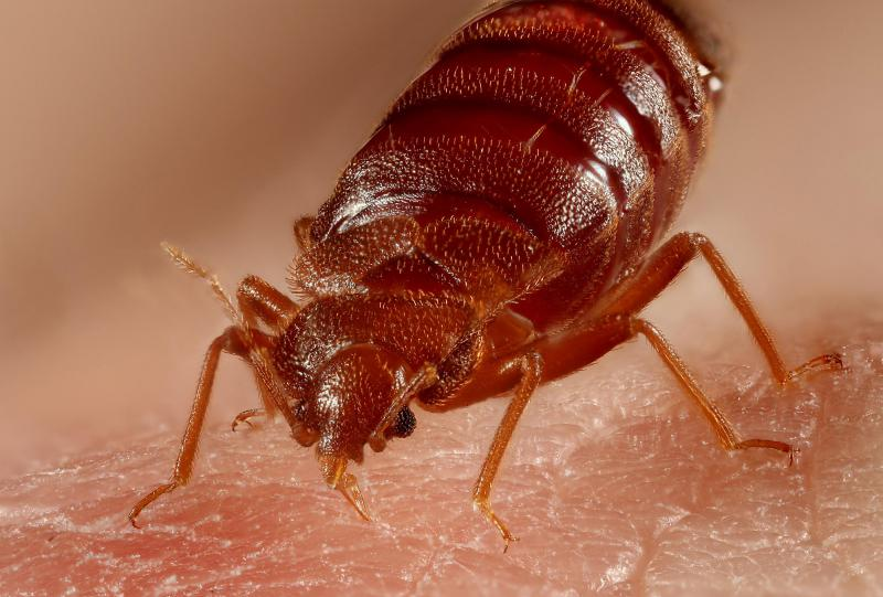 Can Bed Bugs Live Outside and How Long Can they Survive?