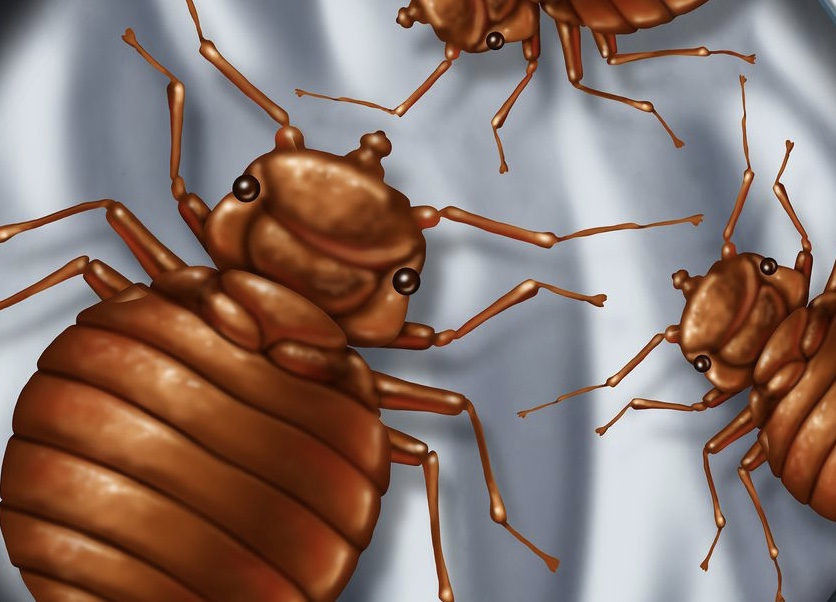 How to Build a Do-It-Yourself Bed Bug Trap
